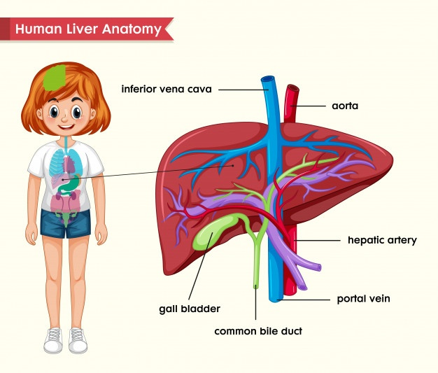 Homeopathy Treatment for Liver Disease